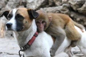 A este perro le ha salido una mochila en la espalda con forma de mono...
